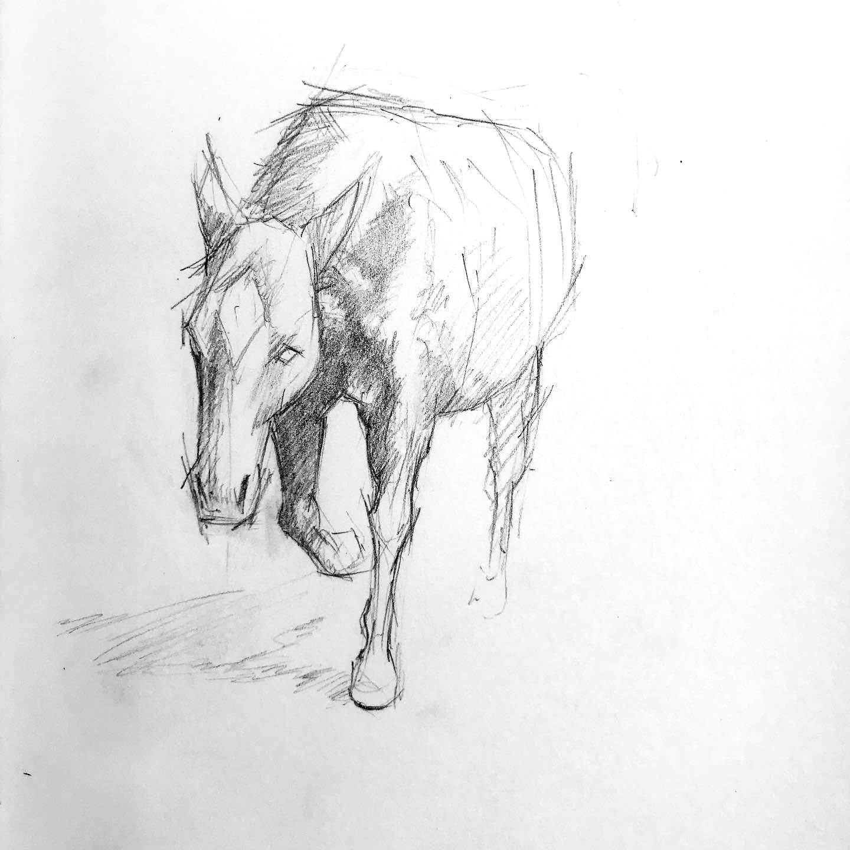 horse_study_1