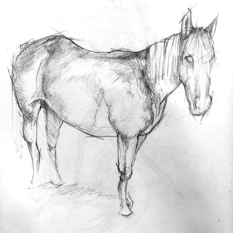 horse_study_2