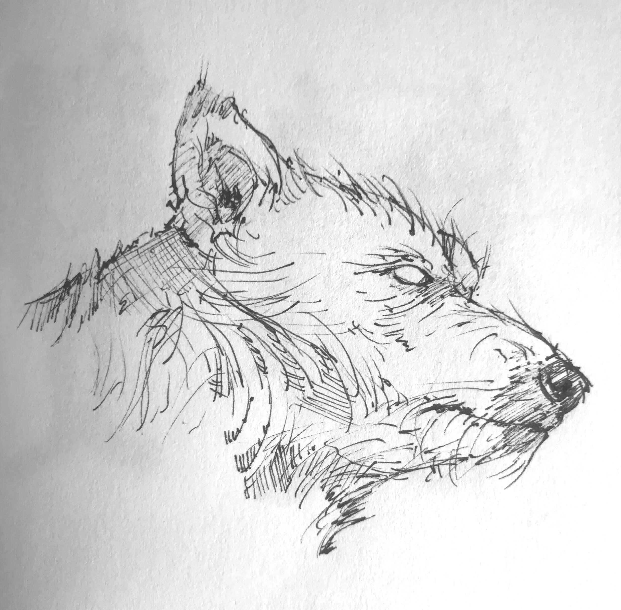 hound_01